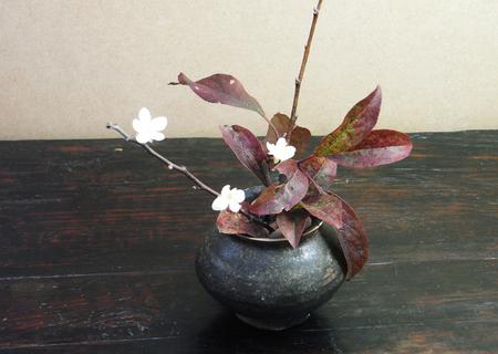 20081211siogetohana02.jpg