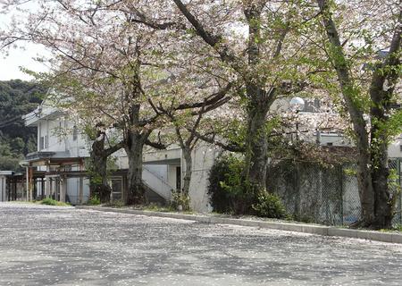 20100406sakura01.jpg