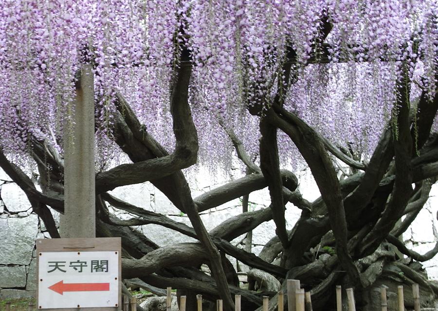 http://www.utuwa-ya.jp/blog/photo/20110511katatsu02.jpg