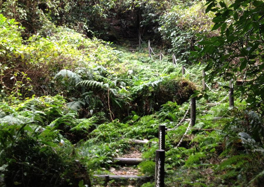 http://www.utuwa-ya.jp/blog/photo/20121111kushidake01.jpg